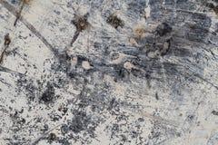难看的东西白色抽象矿物纹理III 免版税库存照片