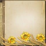 难看的东西秋天背景用向日葵和小尖峰 免版税库存图片