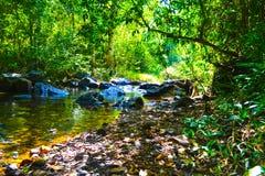 以难贯穿的密林为背景的河 库存图片
