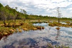难贯穿的沼泽在西伯利亚 免版税库存图片
