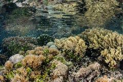 难以置信的珊瑚礁在热带太平洋 免版税图库摄影