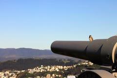 麻雀坐第一次世界大战13 5 cm K 09野战炮兵枪 库存图片