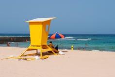 黄雀色费埃特文图拉岛海岛西班牙 免版税图库摄影