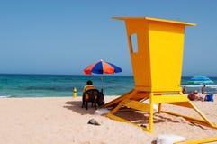 黄雀色费埃特文图拉岛海岛西班牙 库存照片