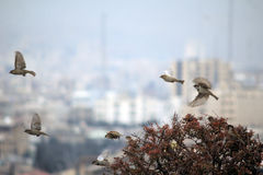 麻雀鸟飞行 免版税库存图片