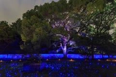 雄伟看法,在Tendai学派,日本的秋天颜色在秋天 免版税图库摄影