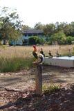 雄斗鸡在杆和许多站立象草的背景 库存照片