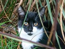 雄猫 免版税库存照片