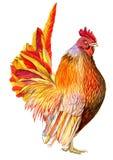 雄鸡在纸的例证水彩 皇族释放例证