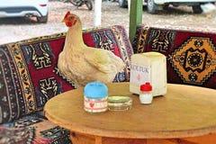 雄鸡拥有桌 库存图片