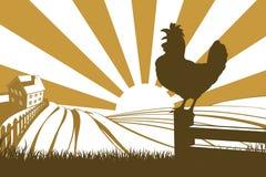 雄鸡鸡剪影打鸣 免版税库存图片