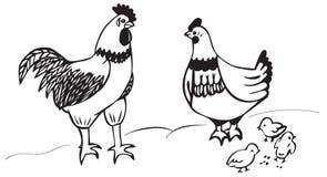 雄鸡鸡和小鸡 库存图片