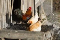 雄鸡-新年的标志 免版税图库摄影