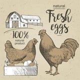 雄鸡chiken和aggs 库存照片