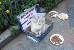 雅尔塔,俄罗斯- 2014年10月06日:无家可归的猫乞求 库存照片