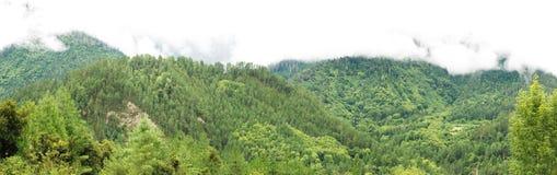 雅鲁藏布江谷植被 免版税库存图片