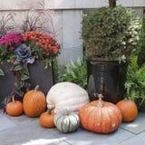 雅致的秋天装饰 免版税库存图片