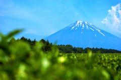 集中于富士山自然看法与生气勃勃种田从静冈日本的茶园的 免版税库存图片