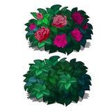 集合协定与在白色背景隔绝的花玫瑰的被环绕的灌木 装备的开花植物风景 库存例证