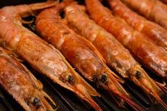 集合大龙虾无缝与海纤巧可口开胃快餐特写镜头顶头行在格栅背景的 库存照片
