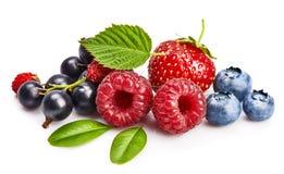 集合新鲜的莓果 混合夏季的果子莓 库存图片