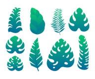 集合热带异乎寻常的密林绿色留下并且种植被隔绝的传染媒介象 皇族释放例证