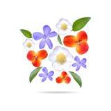 集合现实花和叶子 水彩 免版税库存图片