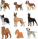 集合纯血统dogsn 向量例证