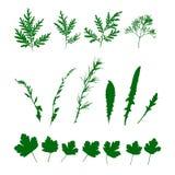 集合绿草,野生植物 被隔绝的样式 向量例证