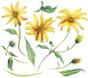 集合花卉元素 水彩花和叶子 免版税图库摄影