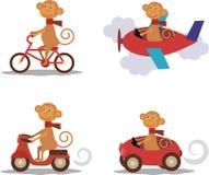 集合-与围巾的逗人喜爱的猴子在运输 免版税库存图片
