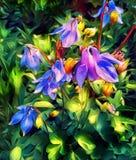 集水量的花在春天在一张床上在庭院里 库存照片