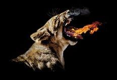 雌狮咆哮火焰 免版税库存图片