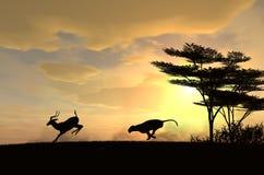 雌狮寻找一只飞羚在日落 免版税库存照片