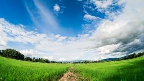 雍在白色云彩和蓝天下的米领域 库存图片