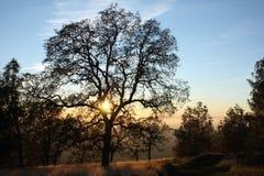 雍容结构树 库存照片