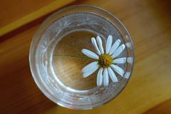 雏菊与白色瓣的延命菊花在刻花玻璃 免版税库存图片