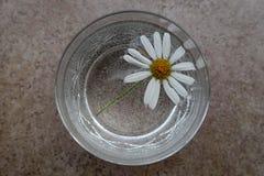 雏菊与白色瓣的延命菊花在刻花玻璃 图库摄影