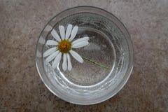 雏菊与白色瓣的延命菊花在刻花玻璃 免版税库存照片