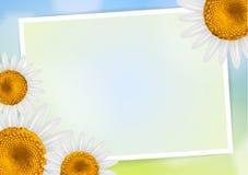 雏菊与空的空间的花框架 图库摄影