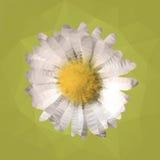 雏菊传染媒介例证多角形马赛克  免版税库存图片