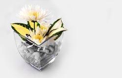 雏菊卖花人装饰 库存照片