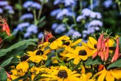 雏菊和庭院 免版税库存图片