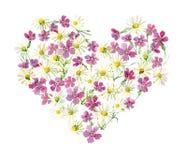 雏菊和康乃馨的花心脏 免版税图库摄影