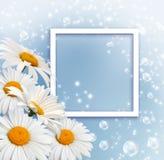 雏菊和照片框架 图库摄影