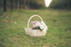 雏菊和玩具熊 库存照片