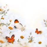 雏菊和蝴蝶春天花束  库存照片