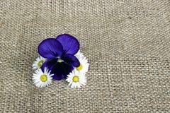 雏菊和蝴蝶花 免版税库存照片