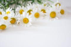 雏菊在白色背景的春黄菊框架 库存照片