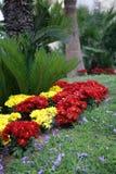 雏菊庭院 库存照片